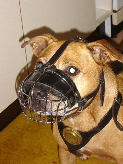 Lightweight Wire Basket Dog Muzzle for Pitbull Comfortable Training