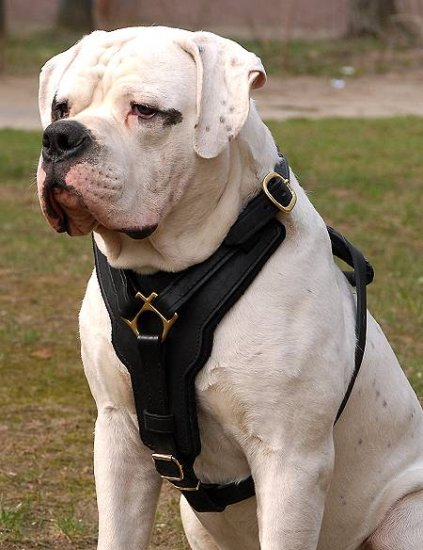 H10 - Exclusive Luxury Handcrafted Padded Leather Dog Harness Perfect for your American Bulldog