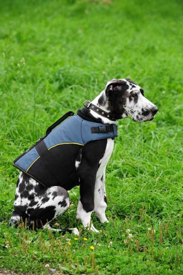 30% Discount - NEW 2017 All Season Extra Strong Nylon Vest Dog Harness- H13-Outdoor