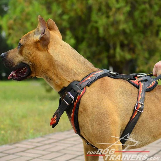 Attack Training Leather Pitbull Harness with Flames