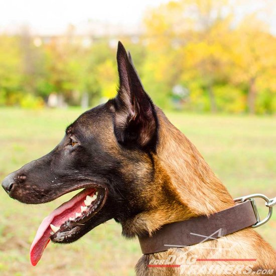 Multifunctional Malinois Leather Collar - c4- 1.5 inch (3.8cm) width