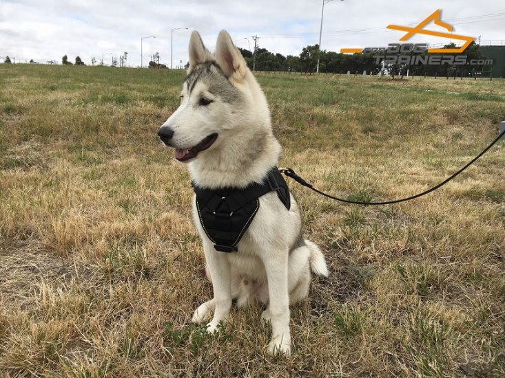 Multifunctional Nylon Siberian Husky Harness for Gorgeous Jimmy