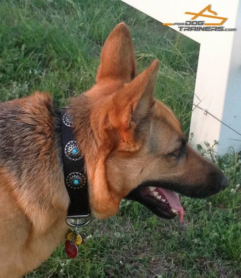 Exclusive Design Leather German Shepherd Collar with Blue Stones