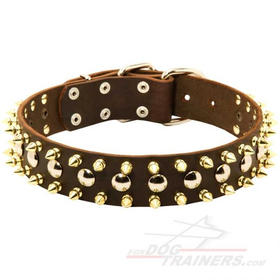 Stylish Walking Leather Dog Collar with Silvery Studs and Brass Spikes