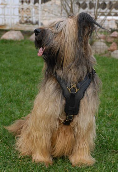 Exclusive Luxurious Handcrafted Padded Leather Dog Harness Briard