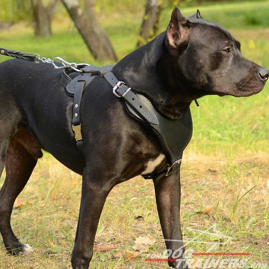 Adjustable Leather Pitbull Harness for Heavy Duty Work