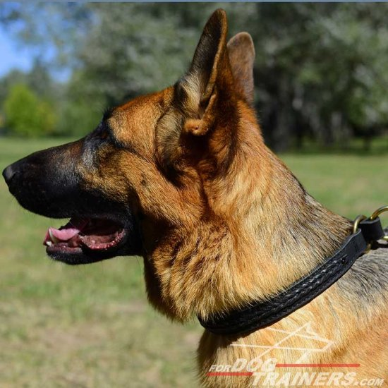German Shepherd 2 Ply Leather Choke Dog Collar Decorated with Braids