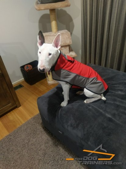 Nylon English Bullterrier Coat Harness for Winter Warming