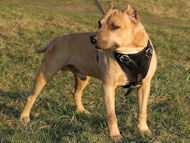Adjustable Leather Dog Harness for Pitbull Agitation/Protection Work