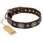 'Extra Pizzazz' FDT Artisan Adorned Brown Leather Dog Collar