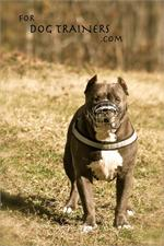 Super Air Ventilation and Comfort Basket Wire Pitbull Muzzle