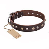 """Rare Flower"" FDT Artisan Brown Leather Dog Collar Adorned with Old-look Hemisphere Studs - 1 1/2 inch (40 mm) wide"