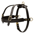 Comfortable Dog Harness for Pulling, Tracking and Walking