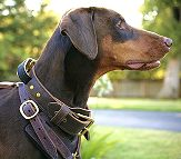 2 ply wide leather dog collar with handle-C33