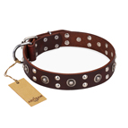 'Pirate Treasure' FDT Artisan Exciting Brown Leather Dog Collar with Studs
