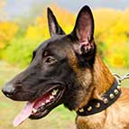 Weather Resistant Malinois Nylon Collar with Fashion Pyramids