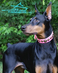 'Pink Gloss' FDT Artisan Leather Dog Collar Presented by Gorgeous Ripley Doberman