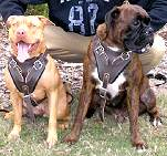 Leather Pitbull Harness for Safe Agitation and Protection Training