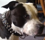 VooDoo in 3 Rows Leather Spiked and Studded Dog Collar