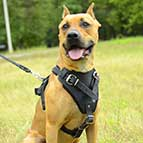 Padded Leather Dog Harness for Pitbull Agitation, Protection and Attack Training