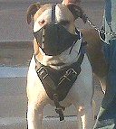 ttack Leather Dog Harness