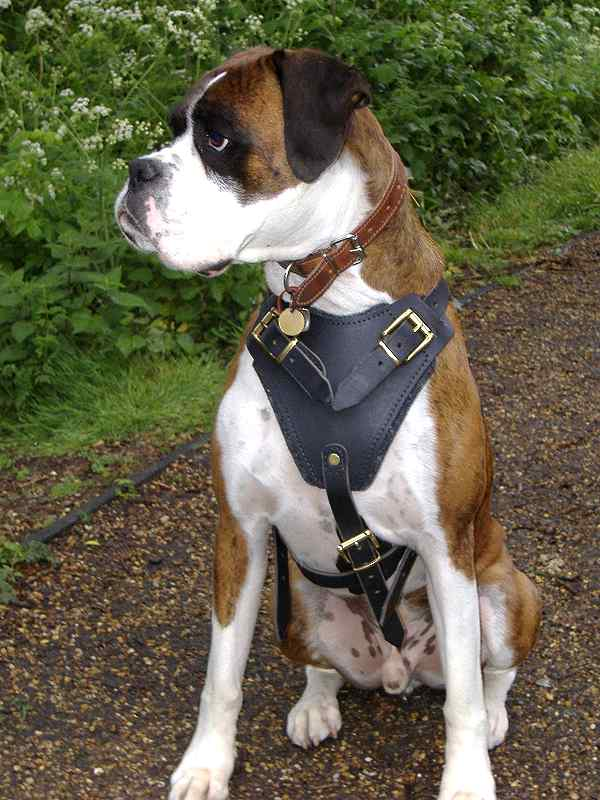 Boxer dog harness for Big dog