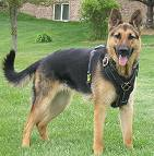 dog harness for german shepherd