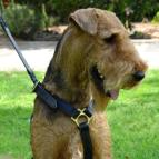 dog harness Airedale Terrie