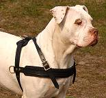 Leather Dog Harness For American Bulldog