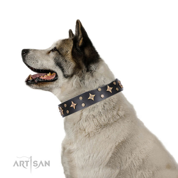 Akita Inu incredible full grain natural leather dog collar with embellishments
