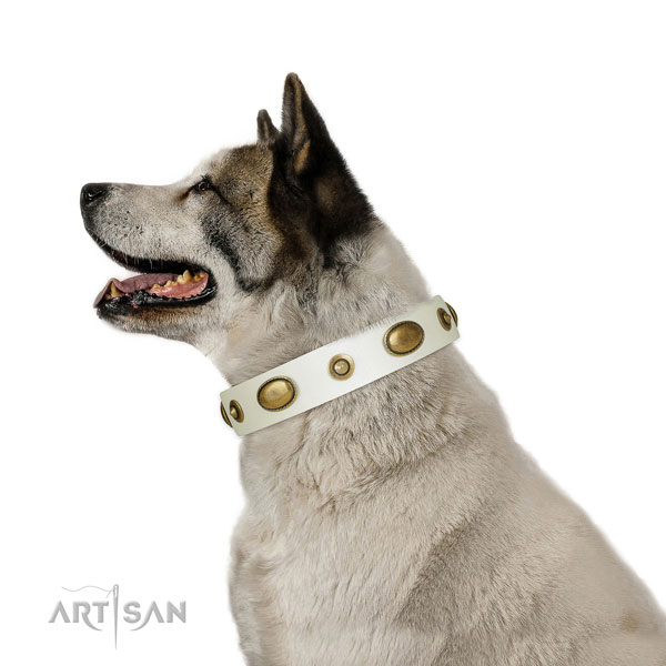 Akita Inu daily walking dog collar of exceptional quality genuine leather