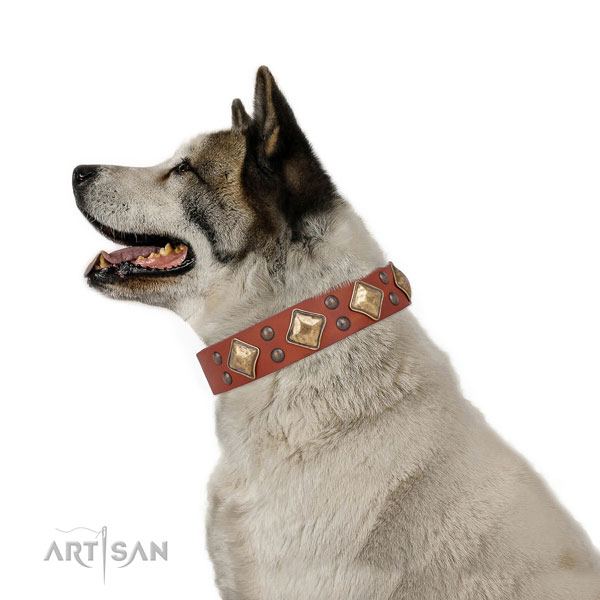 Akita Inu impressive full grain leather dog collar with adornments
