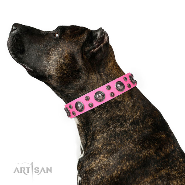 Amstaff handcrafted full grain natural leather dog collar with adornments