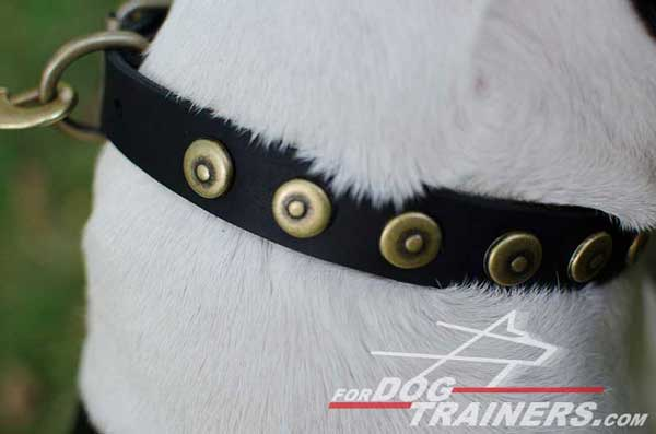 Brass Circles on Walking Leather Dog Collar