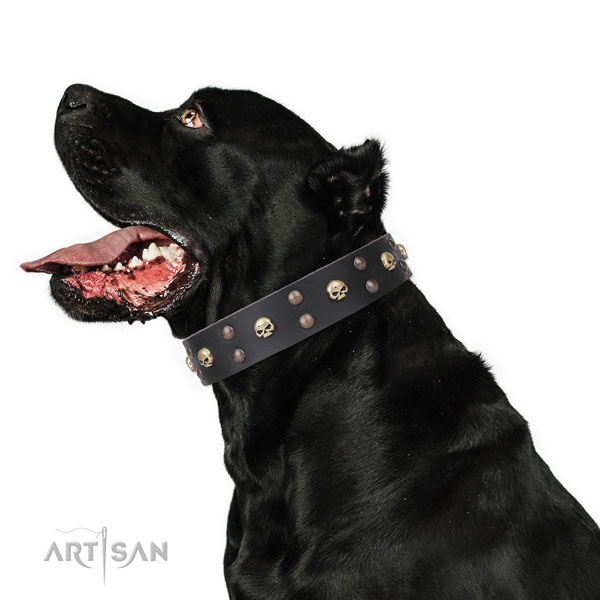Cane Corso unusual genuine leather dog collar with decorations