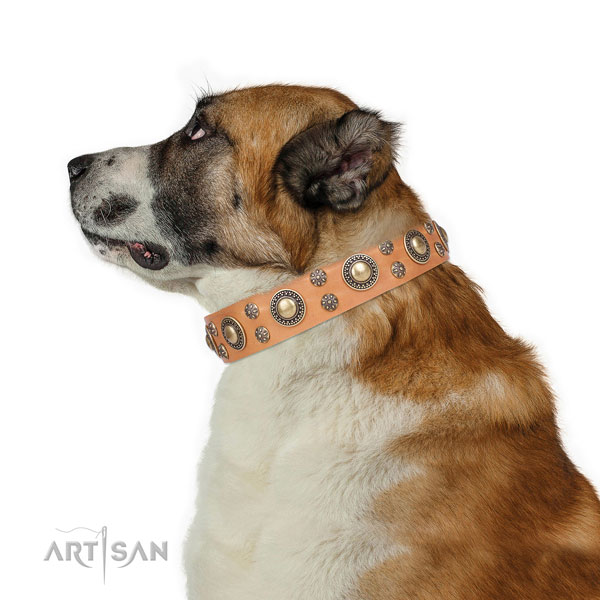 Central Asian Shepherd decorated full grain genuine leather dog collar with embellishments