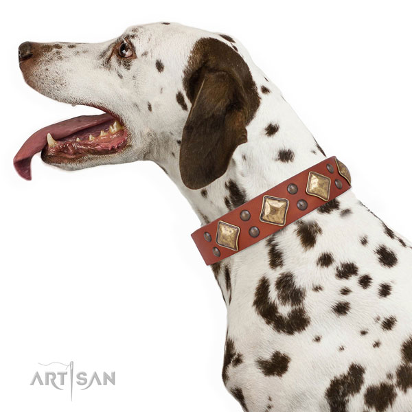 Dalmatian stylish design natural genuine leather dog collar with embellishments