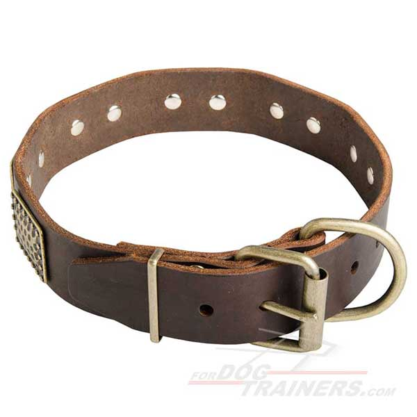 Leather Walking Dog Collar Brass Harware Decorated