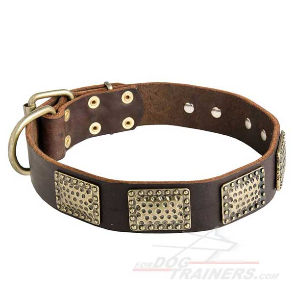 Leather Dog Collar Decorated with Brass Plates