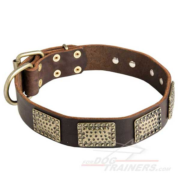 Designer Leather Dog Collar with Brass Plates
