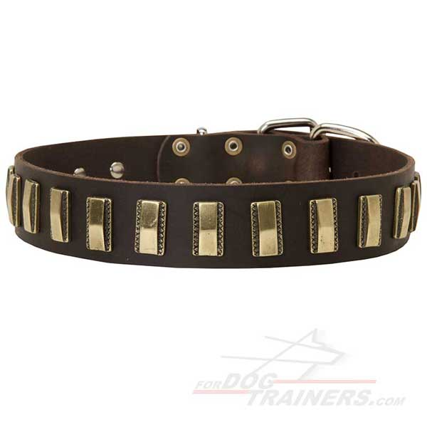 Decorated Leather Dog Collar with Designer Brass Vertical Plates