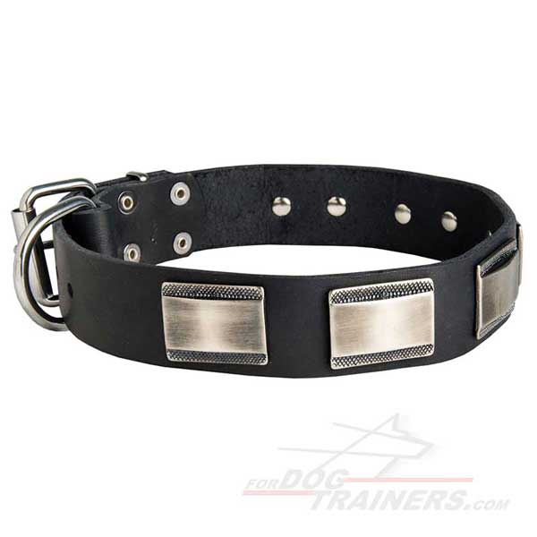 Nickel Plates Decorated Leather Dog Collar