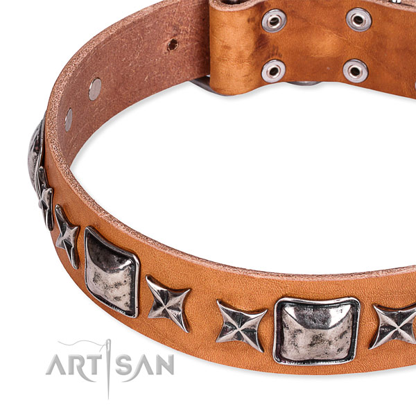 Tan Top Quality Dog Collar with Large Silver Look Plates and Stars