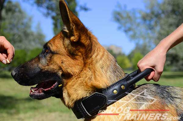 Training German Shepherd Collar Leather Protection