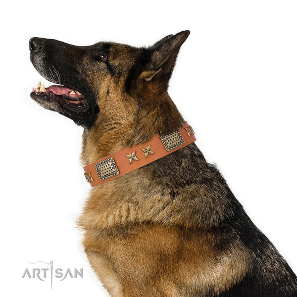 German Shepherd comfortable wearing dog collar of significant quality natural leather