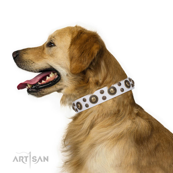 Golden Retriever fine quality full grain natural leather dog collar with adornments