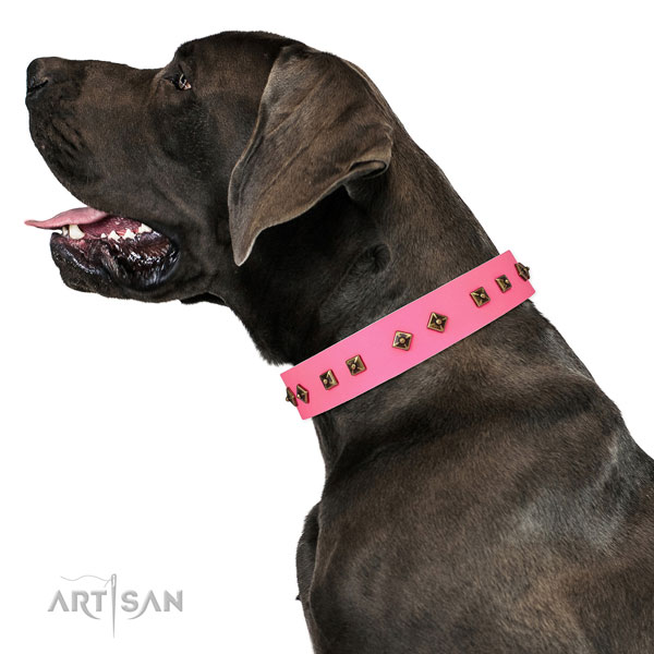 Great Dane easy wearing dog collar of remarkable quality natural leather