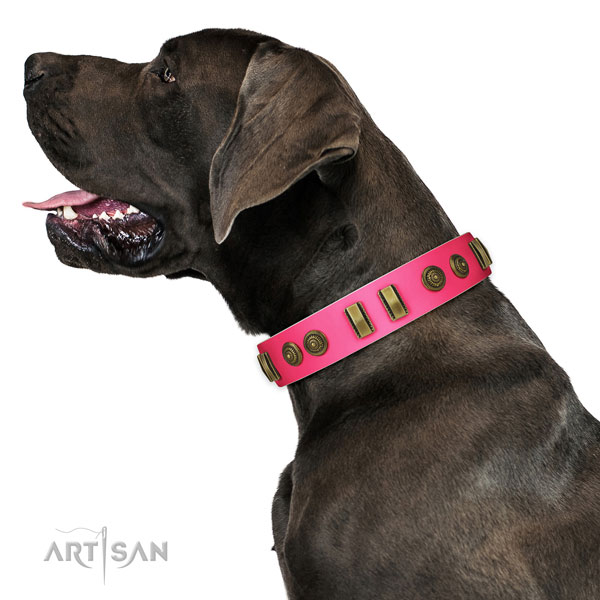 Great Dane everyday use dog collar of exquisite quality leather