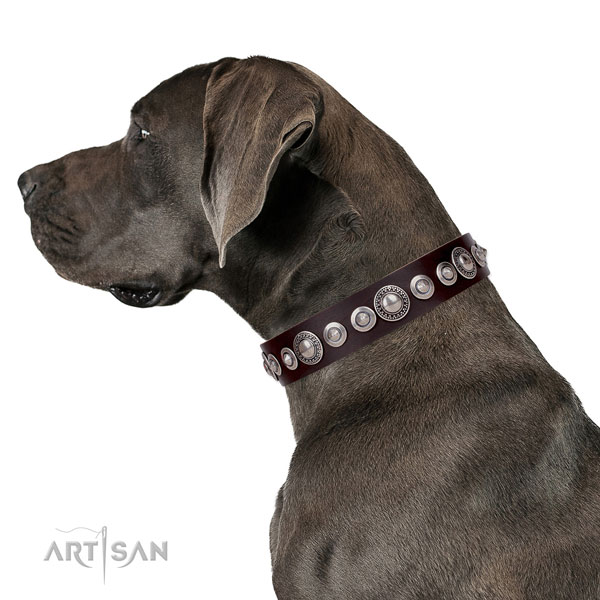 Great Dane adjustable genuine leather dog collar with decorations