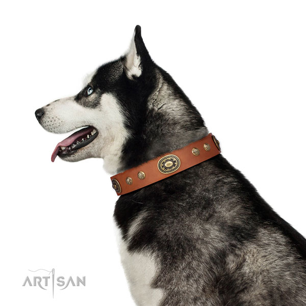 Husky comfortable wearing dog collar of soft genuine leather